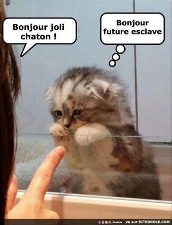 Bonjour joli chaton...
