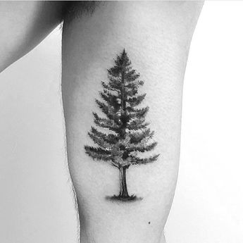 Redwood Tree Tattoo Meaning Incorruptibility Protection Viewinviteco