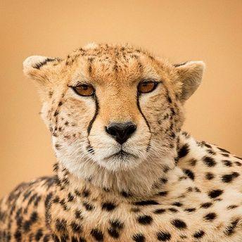 Keep watching... @hermis.haridas . . . #cheetah #PawsTrails #wildlifeconservation #wildlifeonearth #bigcats #love #bestoftheday…