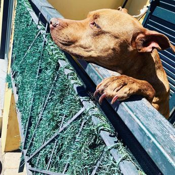 #dog #pitbull #mylove #maggy #instamoment #instapic #post #instagram #picoftheday #pic #apt  #dog #pitbull #mylove #maggy #instamoment #instapic #post #instagram #picoftheday #pic #apt