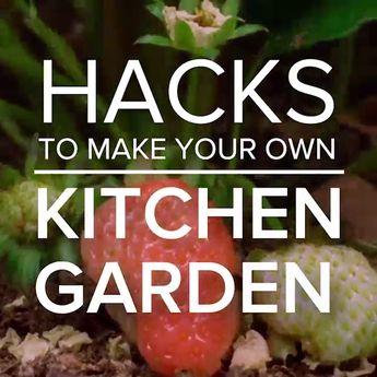 Hacks To Make Your Own Kitchen Garden🌱