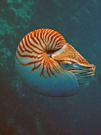 25 Best Pictures Of Sea Creatures