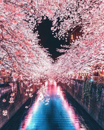 Gambar Wallpaper Bunga Sakura Jepang Bergerak Bestpicture1 Org