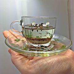Beautiful miniature scene! 🦆🦆 Credits: Beth Freeman-Kane, M.A.A. - Wildlife Miniaturist