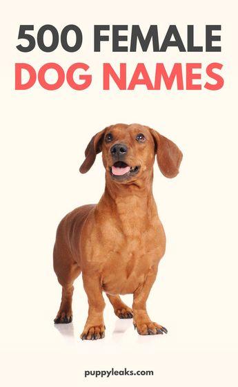 500 Popular Female Dog Names