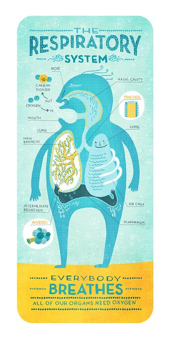 Silly cartoon diagrams of our bodies' major systems [5 pictures]