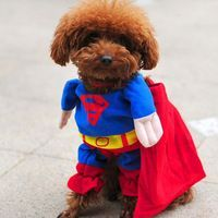 Pet Dog Puppy Cotton Superman Clothes , Halloween Apparel Co...- Pet Dog Puppy Cotton Superman Clothes , Halloween Apparel Costumes Outfit Suit C…  Pet Dog Puppy Cotton Superman Clothes , Halloween Apparel Costumes Outfit Suit Cat Dog Clothing 1pcs/lot Free Shipping  -#animalsanimalsandPetSupplies #PetSuppliescatlovers #PetSuppliesorganization #PetSuppliespackaging #PetSuppliesphotography