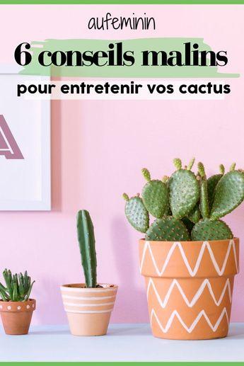 Cactus : comment l'entretenir ?