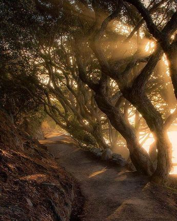 Here's a stunning shot of the Mount Maunganui base track in New Zealand by Rach Stewart -- would love to visit!