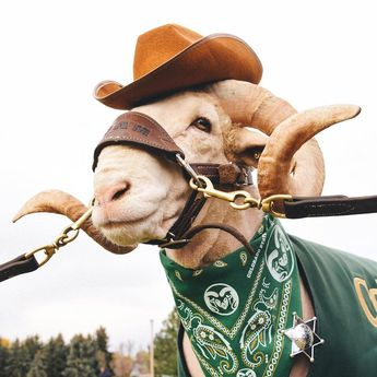Happy Halloween, Rams!