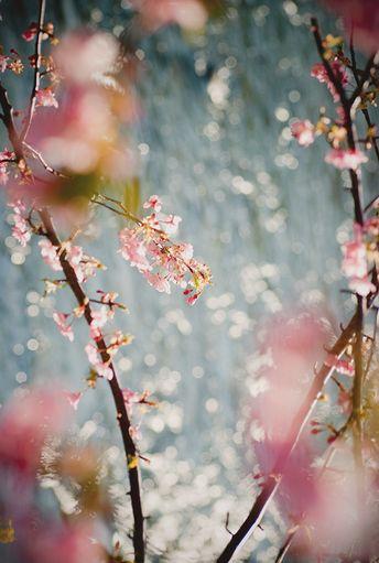 +++ - hellanne: sakura (by somaruha) Hmmmhmmhm.tumblr.com