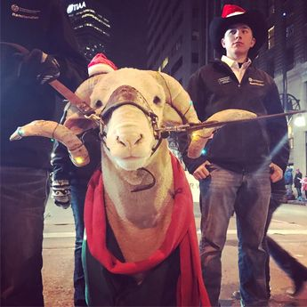 CSU's Cam the Ram is lighting up our world at the Parade of Lights.