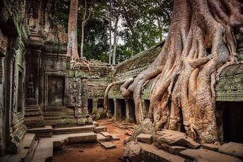 10-racines-d-arbres-gagnent-contre-le-beton-9 #civilization #civilization