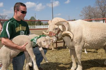 Cam's Lambs at Colorado State University