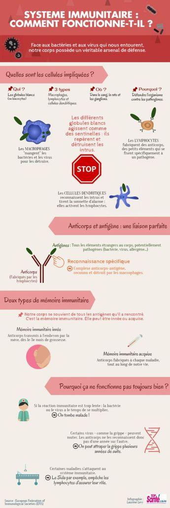 Infographie : comment fonctionne le système immunitaire ?...