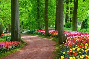Home Flower Gardens and Flower Landscape Pictures