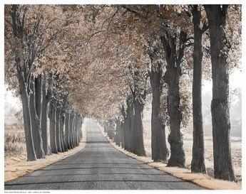 Road Through Tree Alley Art Print