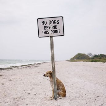9 Animals Who Really Just Don't Care