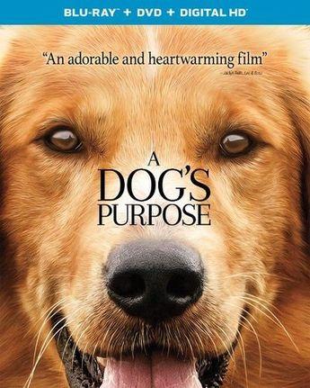 A Dog's Purpose [Includes Digital Copy] [UltraViolet] [Blu-ray/DVD] [2 Discs] [2017]