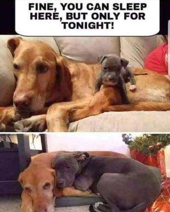 45 Funny Animal Pictures & Memes