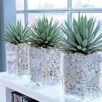 Interior plants - WSZYSTKO NA WIDOKU Ciekawe może być nie tylko to, co wystaje z doniczki, ale i to, co w środku Do szklanych naczyń wsyp więc białe kamienie i żwir (znajdziesz je w każdym sklepie ogrodniczym