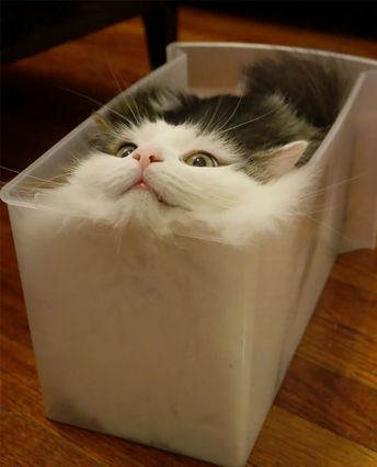 20 preuves en image que les chats sont liquides