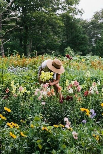 Flower picking season