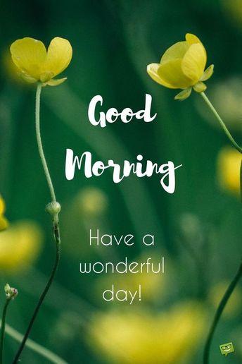 Good morning  #goodmorning  #goodmorningquotes #inspirationalquotes #goodmorningimages