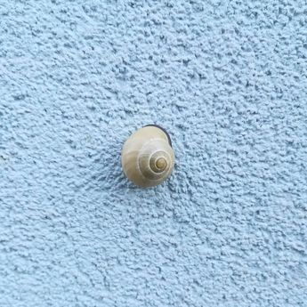 #snail on the #wall #nofilter #huaweiphoto