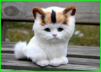 Unduh 61+  Gambar Kucing Lucu Imut Dan Menggemaskan Paling Lucu HD
