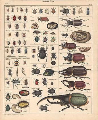 Diversity of Beetles