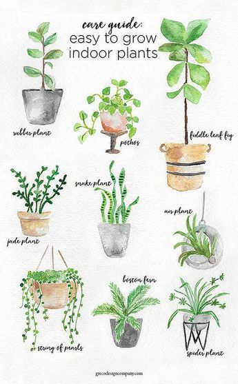 A Guide to Caring for Easy to Grow Indoor Plants including