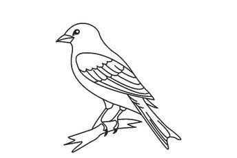 Mewarnai Gambar Burung Beo