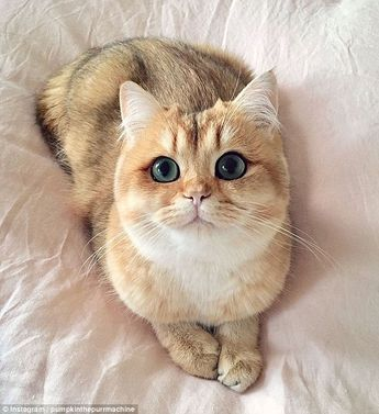 Are these the most beautiful cats in the world?
