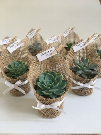 Succulent favors for weddings, birthdays, christenings, baby showers or any special occasion. #weddingfavors #wedding #favors #ad #succulent
