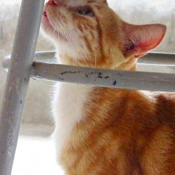 Que puedo decir, mi gato es demasiado fotogenico, lo heredo de mi 🙊😎🍃 #MichiModelo #Cat #Baby #like4like #followme #photography #canon