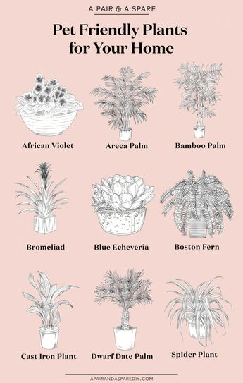The Best Pet Friendly Plants for Your Home