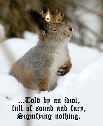 Squirrel, you really don't have to do this in the snow.