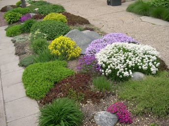 Lush boulevard garden in spring. Would need some hearty stuff to survive & bloom in summer. Sedum? Lavender?