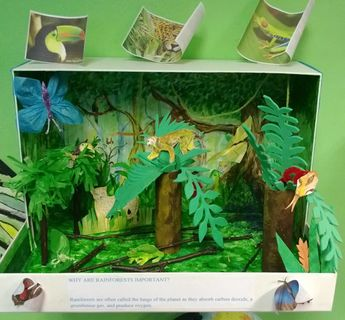 Rainforest Forest Ecosystem | Click Here to get some more
