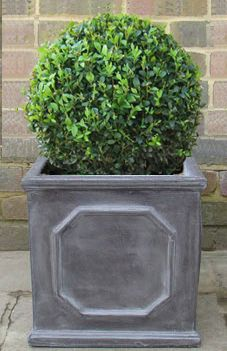 Buxus ball planted in new pots on either side of the front door.