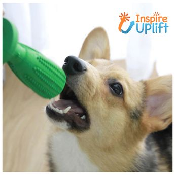 Dog Toothbrush Toy #inspireuplift   The Dog Toothbrush Toy is a must-have for dog owners who want to keep their pet's teeth healthy and clean! Dogs will usually run away from you when you try to clean their teeth, but the Dog Toothbrush Toy is a great way to make your pets actually want to clean their teeth by giving them a fun and enjoyable experience. Did you know that 84% of dogs face oral health issues by the age of 3? Common dog toothbrushes promise that they can clean dog's teeth well but