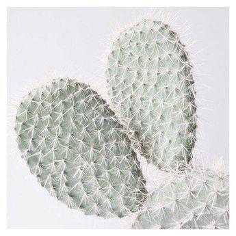 S w e e y t O r N o t #plant #greenery #minimal #design #instaplants #details #cactus #cactuslover  S w e e y t O r N o t #plant #greenery #minimal #design #instaplants #details #cactus #cactuslover #greenhouse #flower #cactusflower #foodporn #instagood