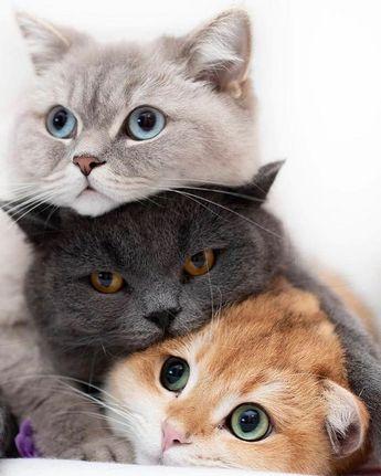 Three cats relaxing and cuddling #threecats #cutecats #beautifulcats #aww
