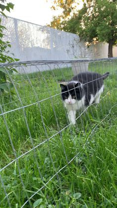Why your cat wants tunnel vision for evening bug hunts