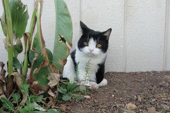 tard the grumpy pics   grumpy cat tard tardar sauce grumpycat tard the grumpy cat ...