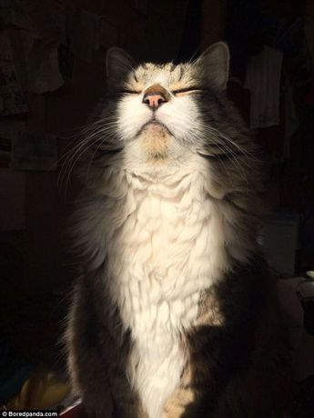 Photographs prove how much cats love the sunshine