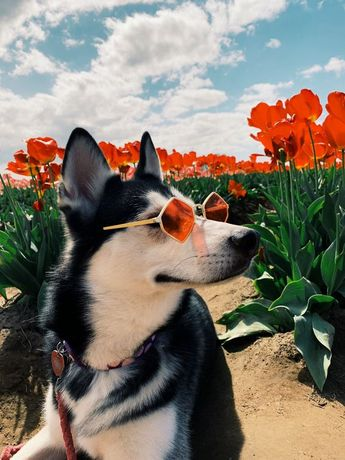 10 Fun Summertime Activities & Vacation Ideas For You And Your Dog
