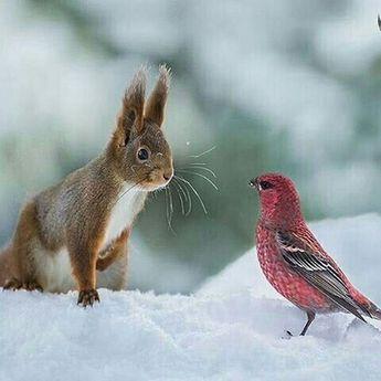 lapin face à face avec oiseau rouge dans la neige