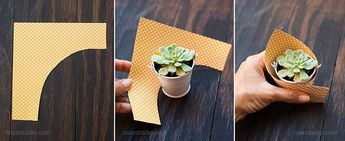DIY Mini Succulent Favors for a Baby Shower